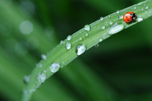 beruška na trávě