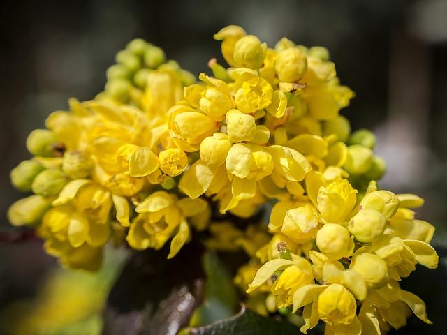 žluté květy