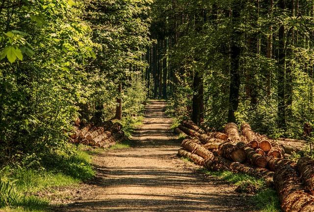 kulatina v lese